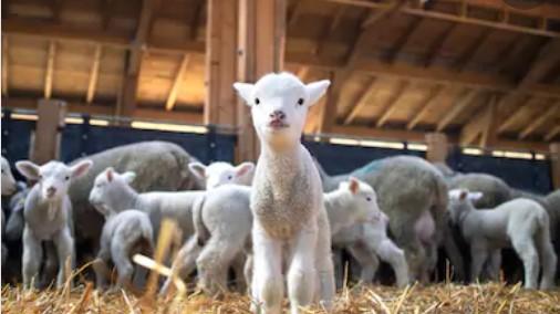 Tarım ve Hayvancılık - Kırsal Kalkınma Destekleri