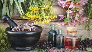 Tıbbi ve Aromatik Bitkiler İle Süs Bitkileri İçin Hazine Arazisi Tahsisi